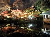 大田黒公園の紅葉ライトアップ=12月5日まで